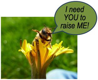 bee raise me