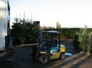 Carissa Unloading Trees Coming to The Plant Farm