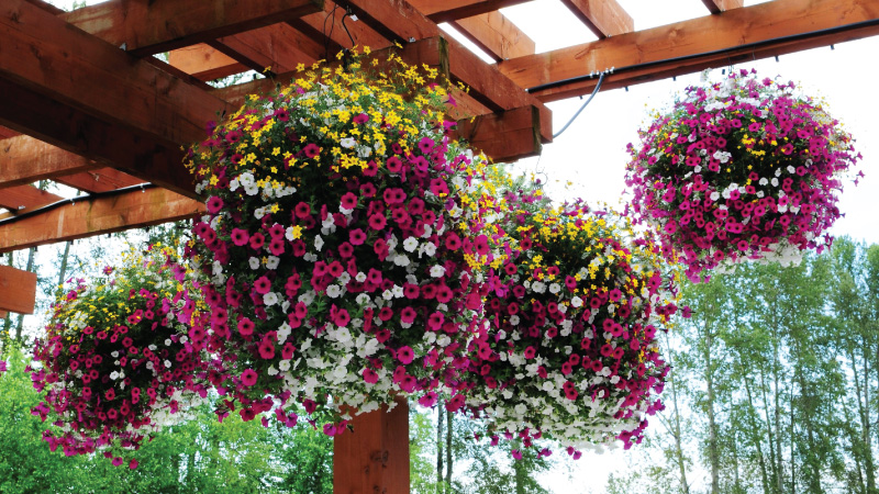 301 moved permanently - Summer hanging basket ideas ...
