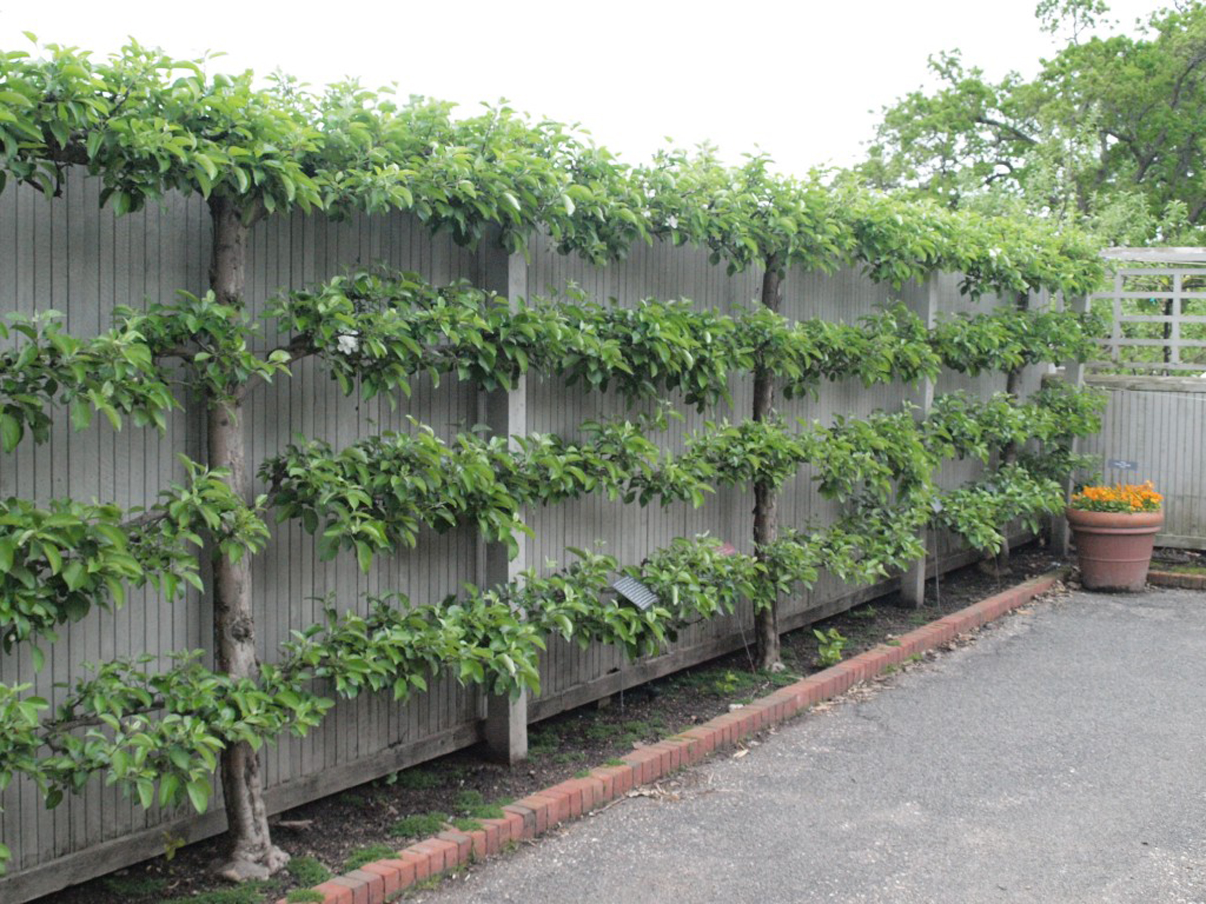 small wall edible garden ideas photograph creative fences